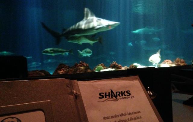 Sharks Underwater Grill - restaurante no Sea World