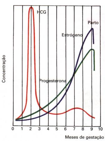 hormônios na gravidez bhcg progesterona estrogenio
