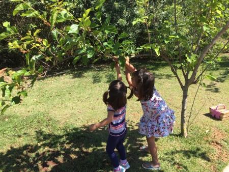 colhendo amoras qualidade de vida crianças